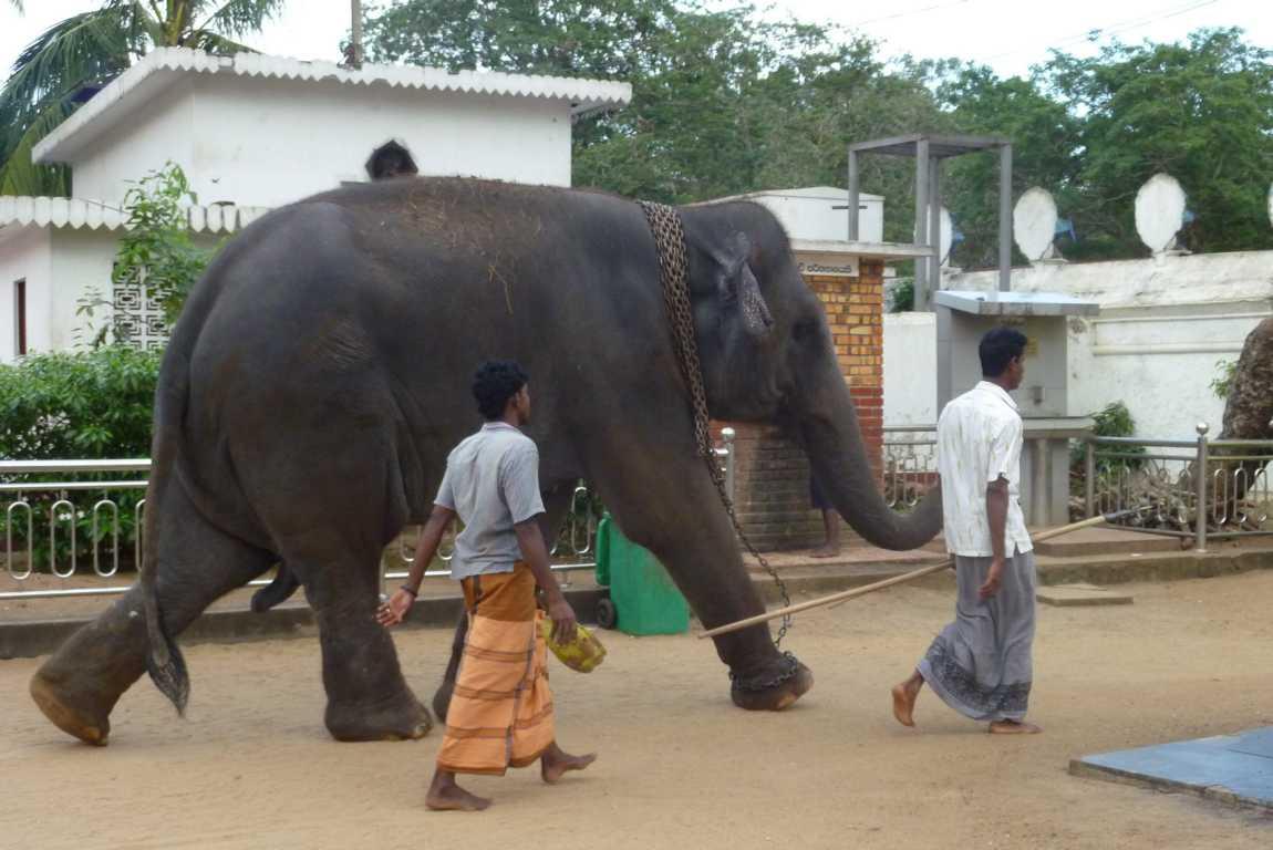 K1024_20100108-2010.01. Sri Lanka 061