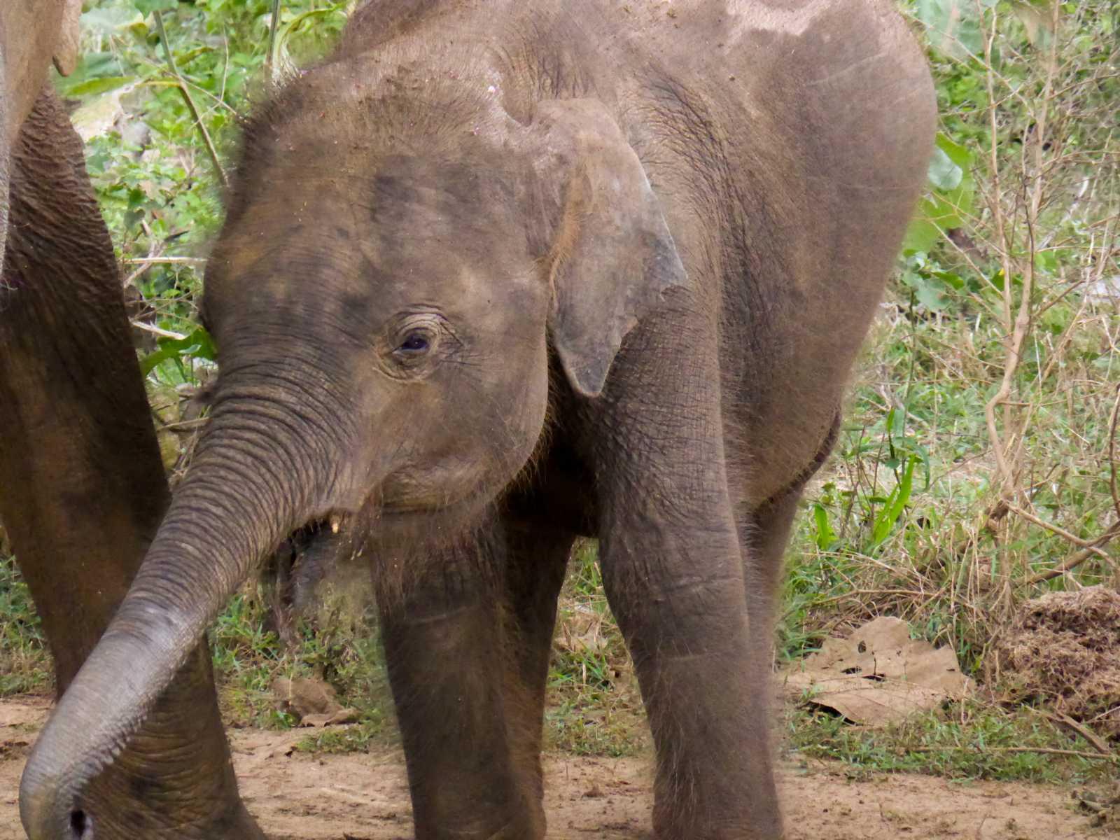 K1600_Sri Lanka 150908103938