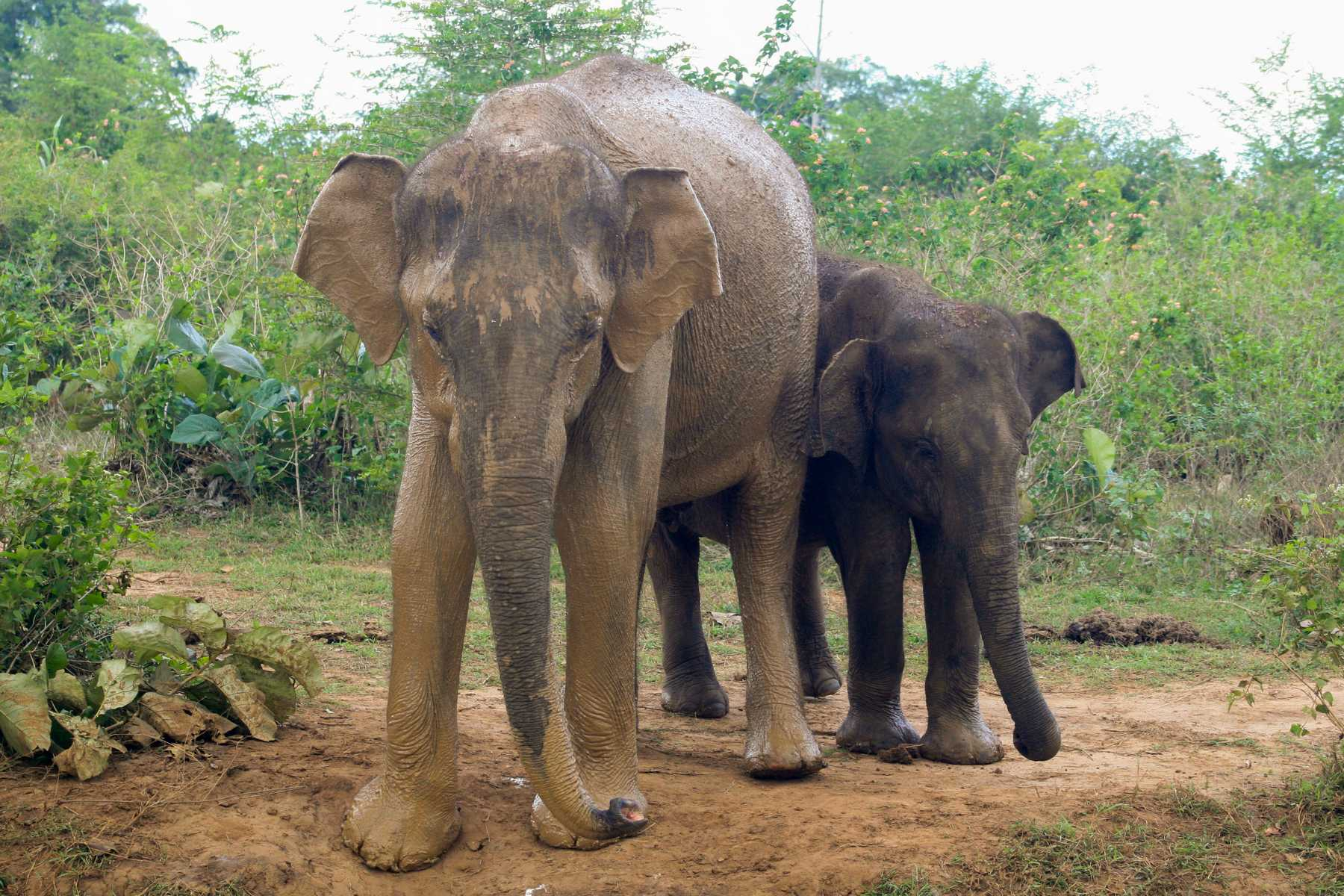 K1600_Sri Lanka 150908105153