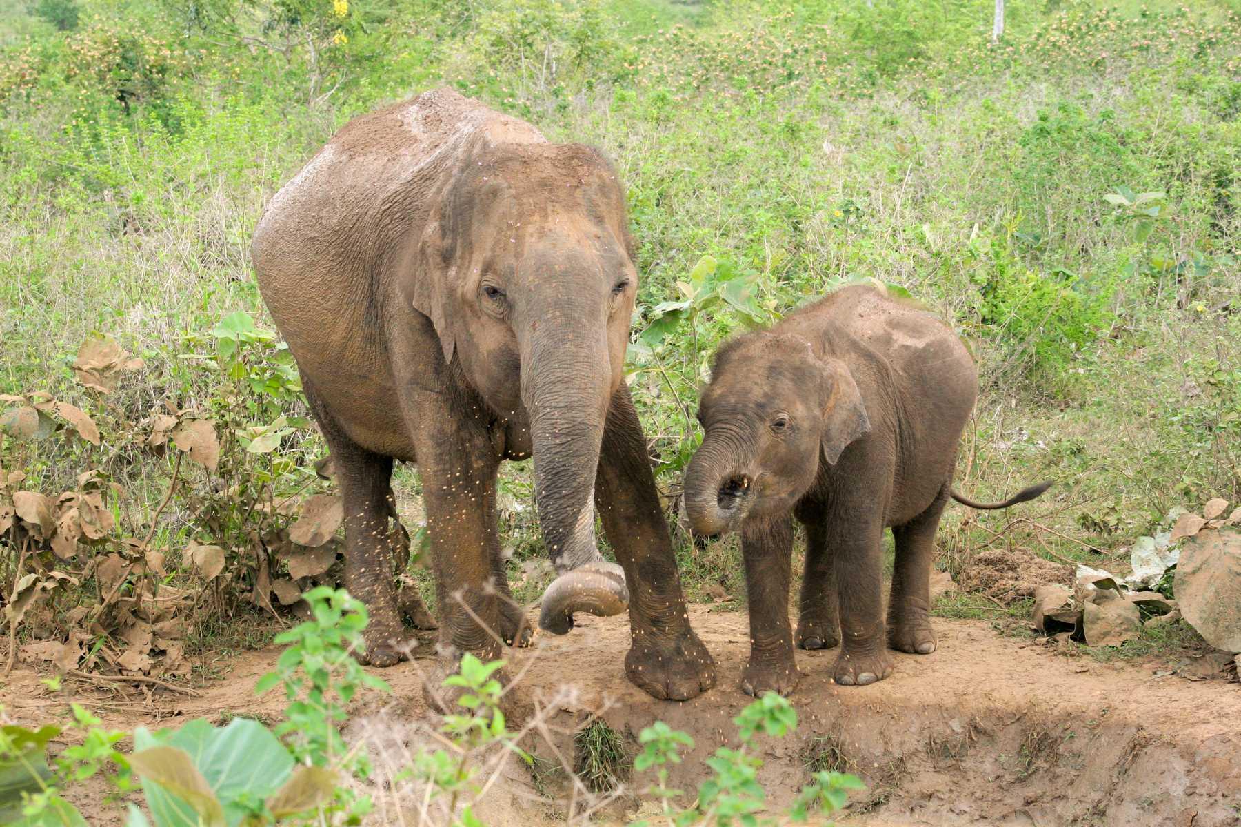 K1600_Sri Lanka 150908105525