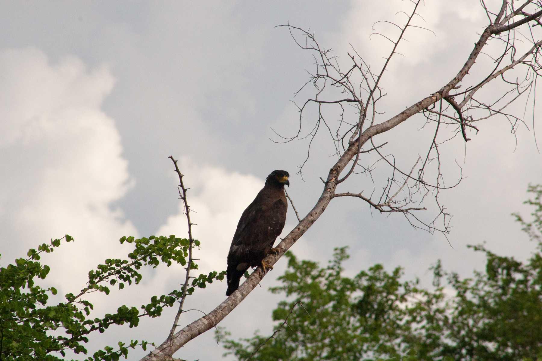 K1600_Sri Lanka 150908112507