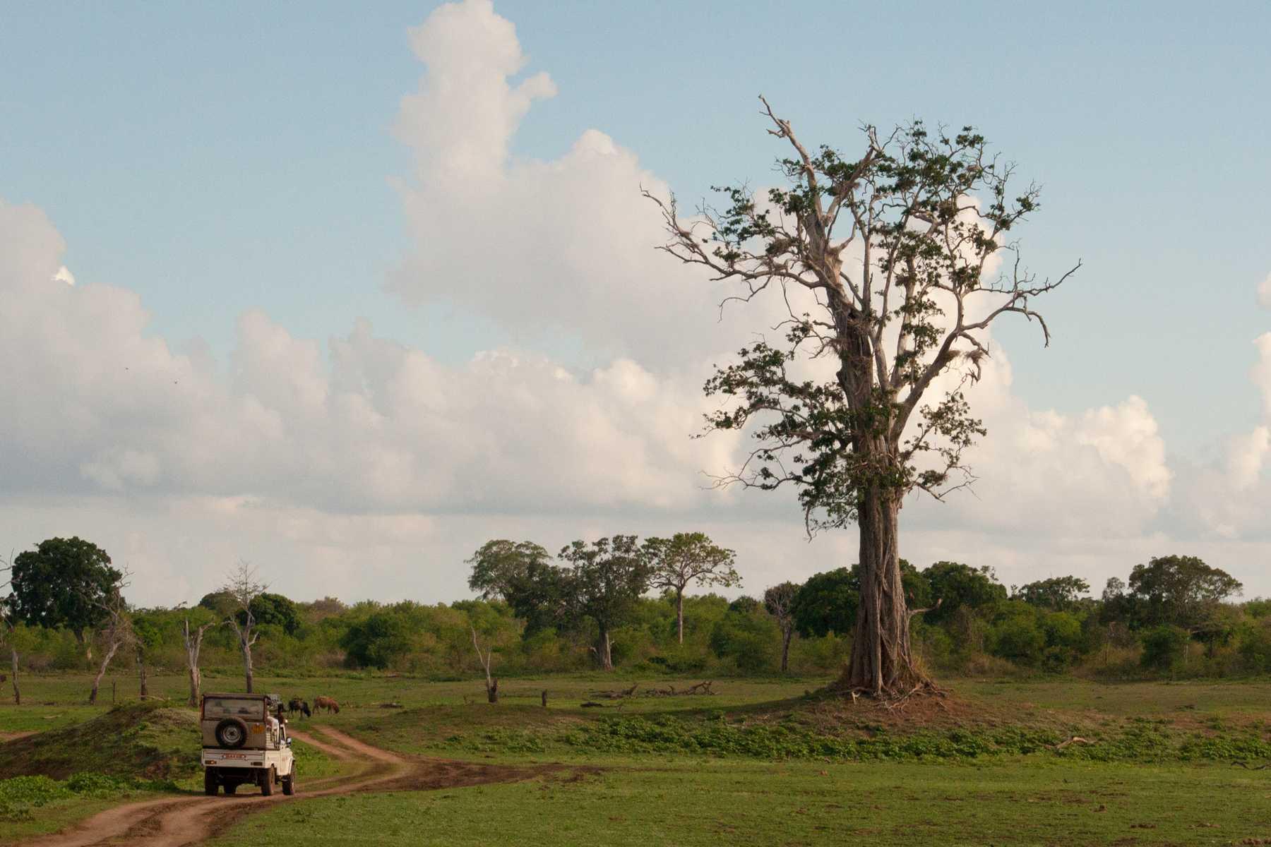 K1600_Sri Lanka 150908114005