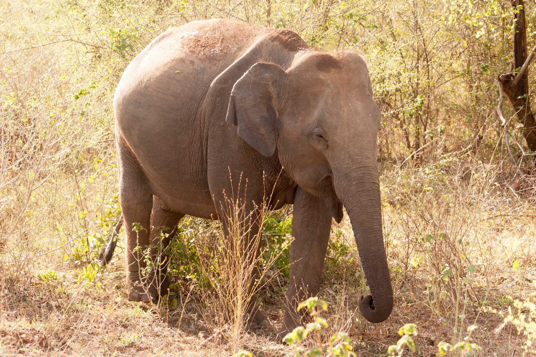 K1600_Sri Lanka 150908121947