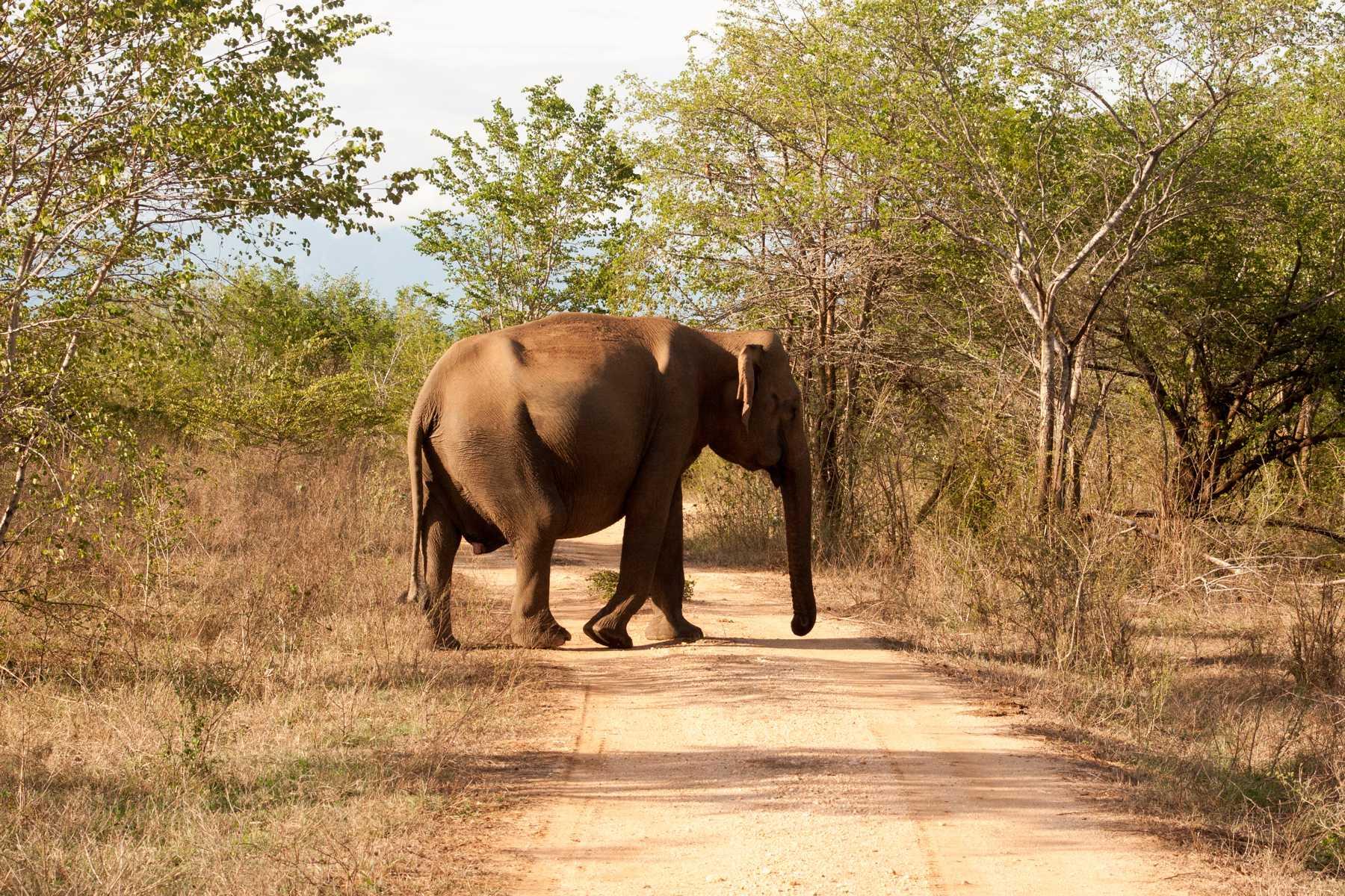 K1600_Sri Lanka 150908122057